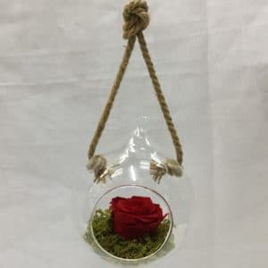 PRESERVED Red Rose